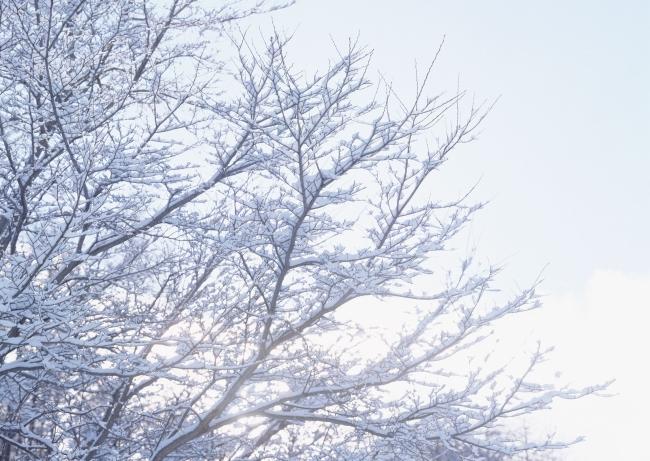 529 兆  树枝 树木 冬天景色 下雪 冬季风景 冬天 冬季 自然