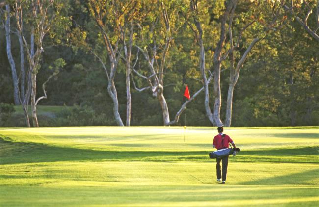 366 mb  草地 树林 运动 休闲 高尔夫球 绿色 绿树 体育