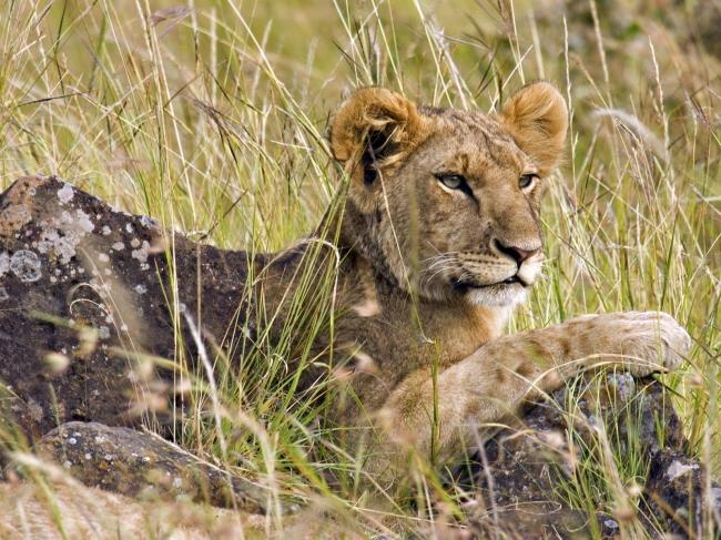 非洲可爱动物图片
