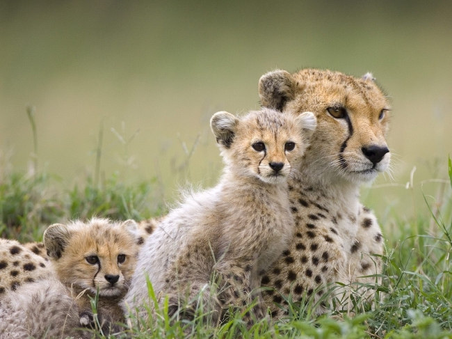 动物妈妈保护宝宝