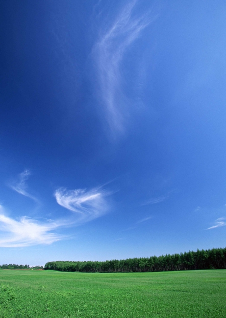 手机壁纸蓝天白云草地
