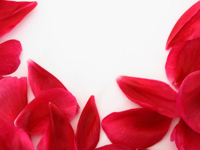 红色花瓣背景素材