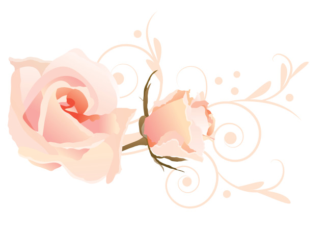 粉色 玫瑰 花纹 背景