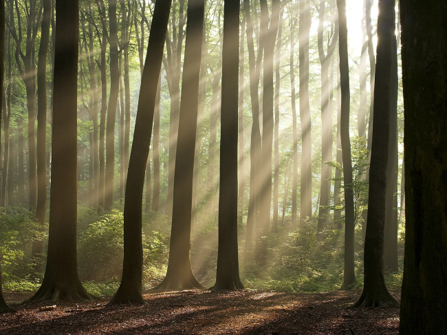 027 兆  森林 树 大树 夏天 阳光 绿色 自然风景 自然景观