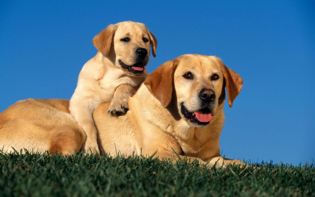 可爱 宠物 动物 动物写真