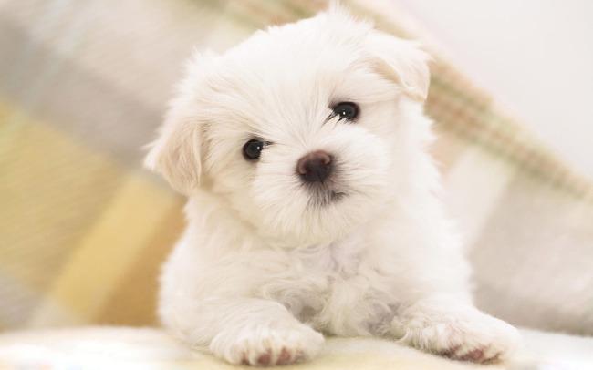 最可爱的宠物小狗