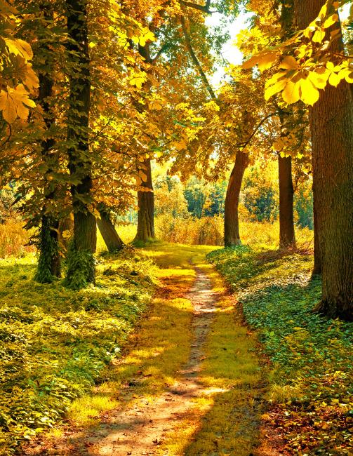 秋天风景 秋季树林 美丽风景