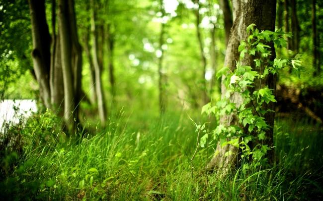 高清森林树木野草风景图片