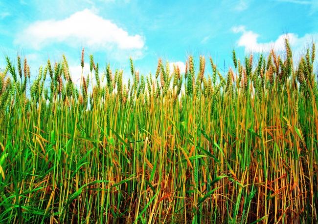 自然景观绿色植物