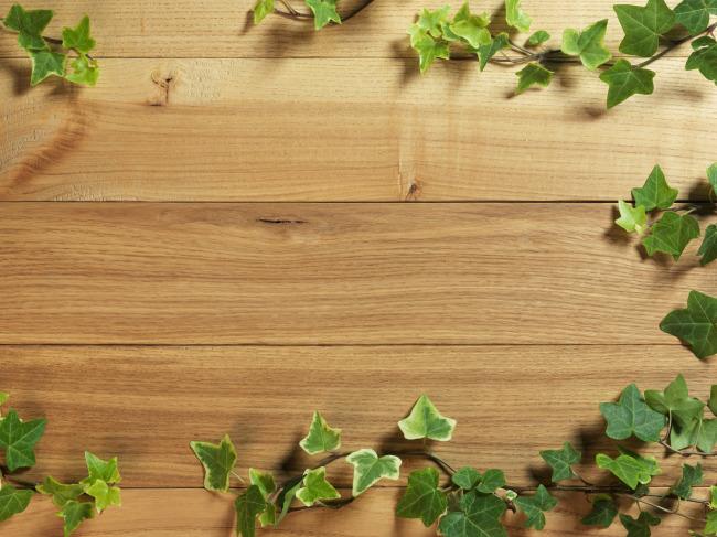 美丽背景 木纹 木质 绿草 木板 复古 梦幻背景 边框相框 底纹边框