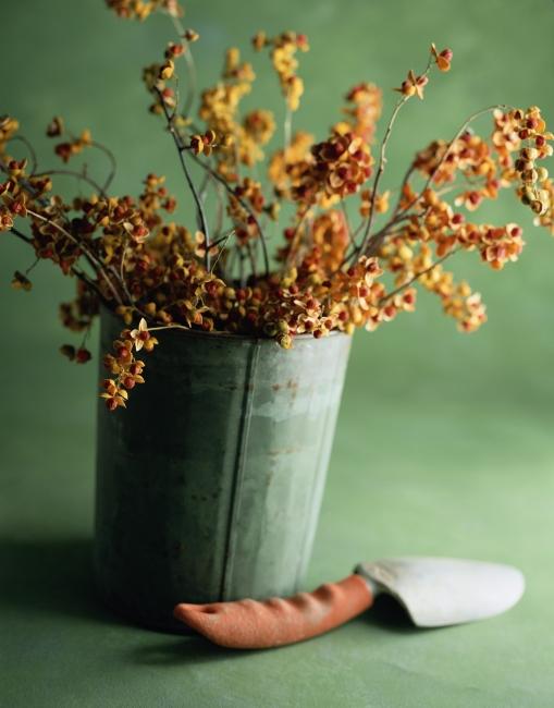 花盆种植植物