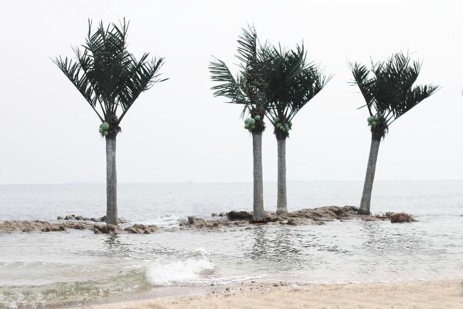 海南岛椰子树简笔画