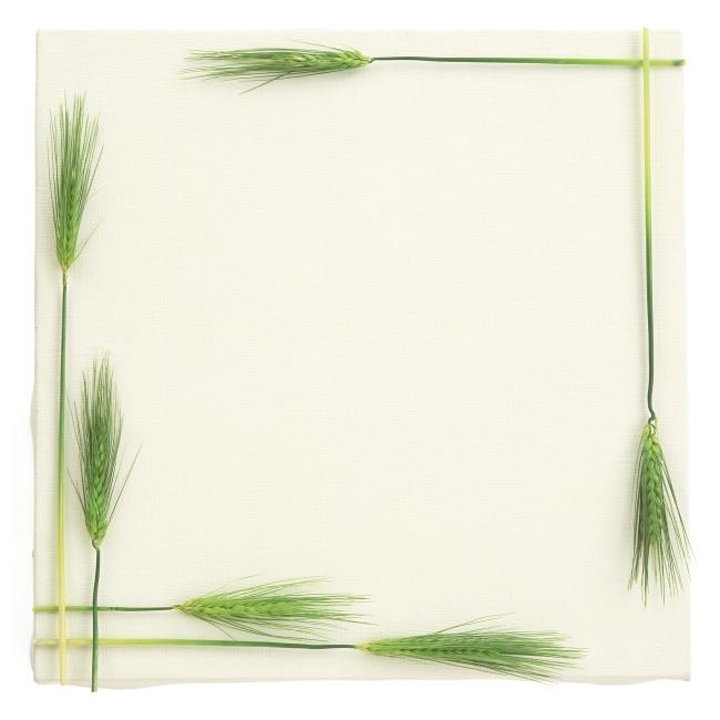 艺术相框 树叶边框 植物边框