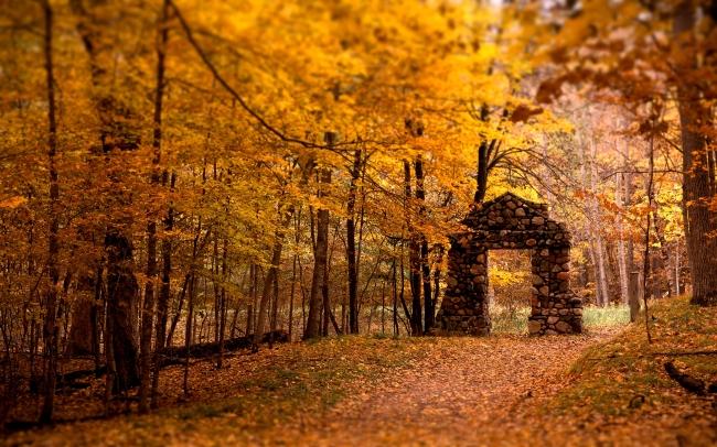 秋天森林风景图片下载