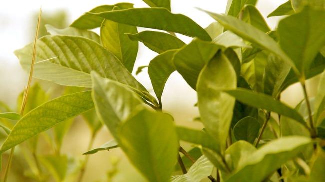 景观植物-实拍视频素材-视频素材|片头片尾图片