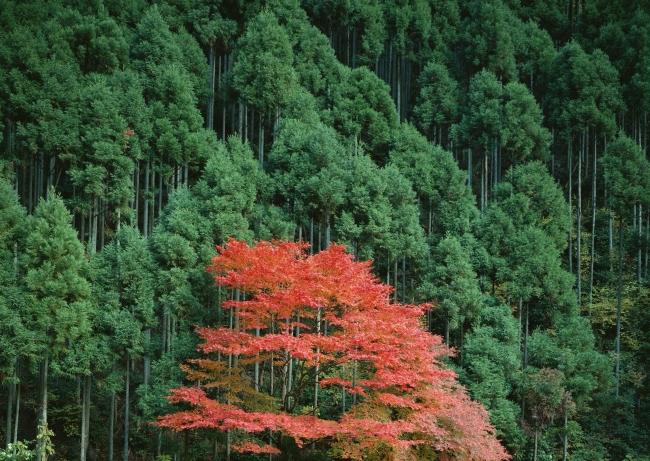 野外树木风景图片大全