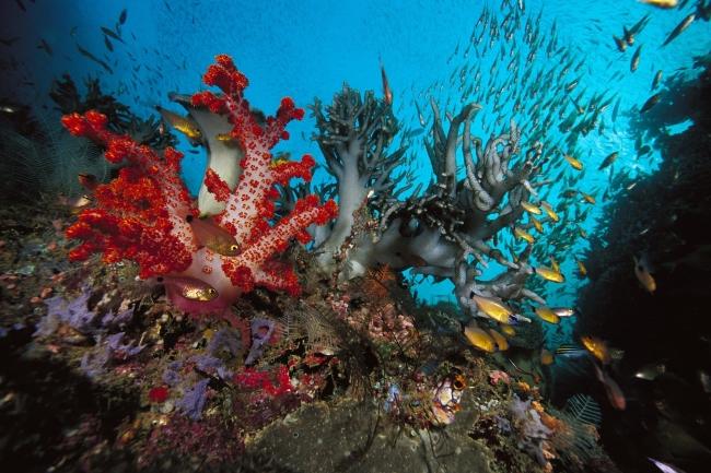 海底世界风景图片