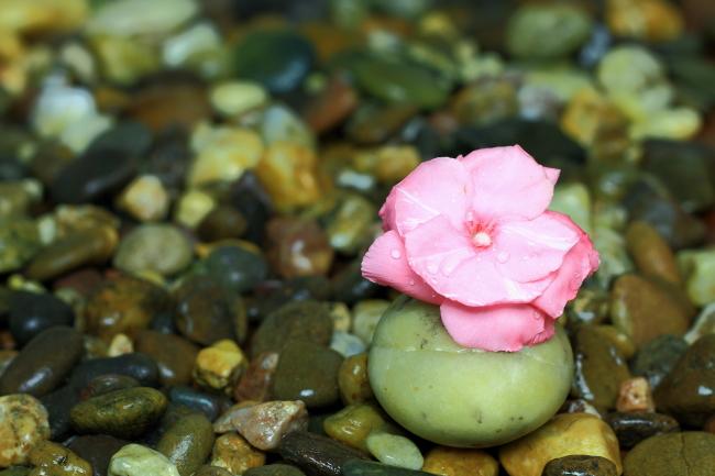 花卉石头简笔画