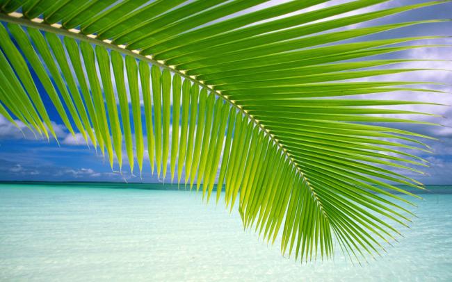 椰子树叶大海主题桌面壁纸高清晰大图片素材