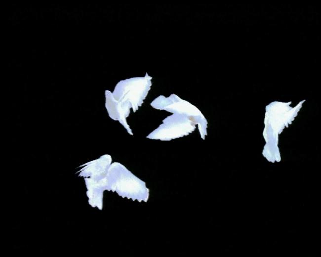 和平两会生日国庆鸽子飞翔通道动态背景