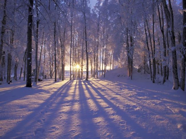 雪地 雪树 森林