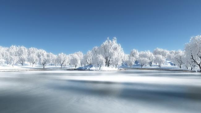 雪树 雪地