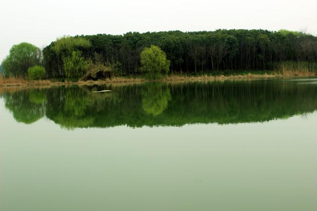 湖边树林天空背景图片
