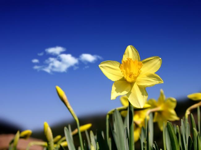 黄色的花 一枝花