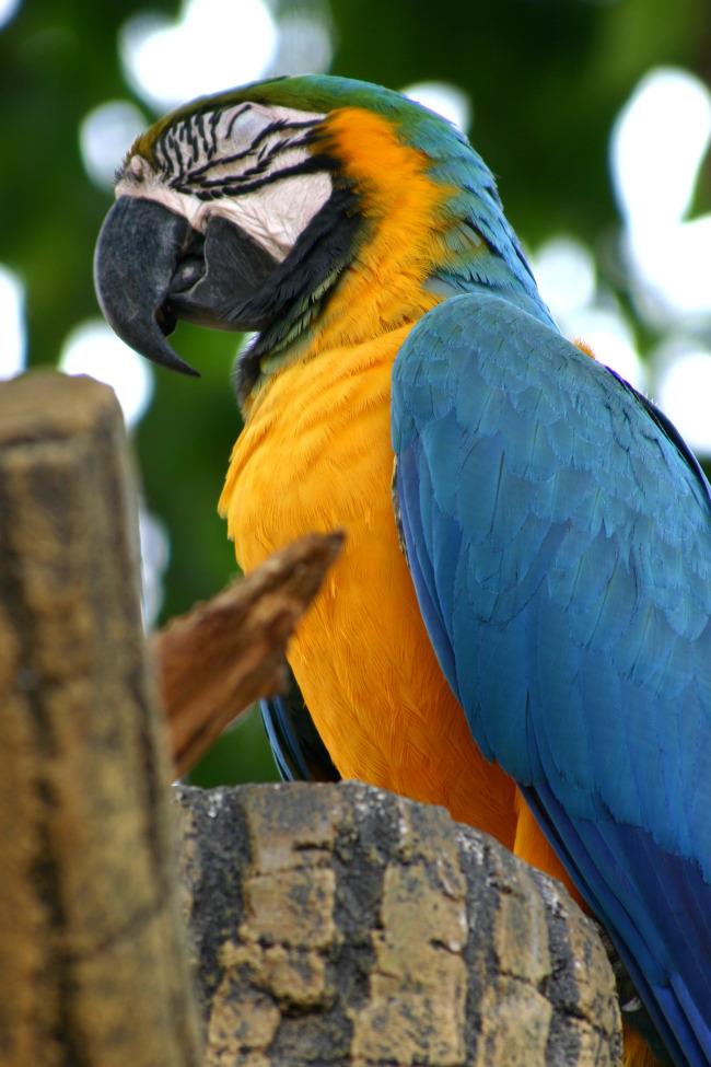 兆  鸟 羽毛 鹦鹉 动物园 鸟类 雀鸟 候鸟 野生动物 鸟群 珍稀