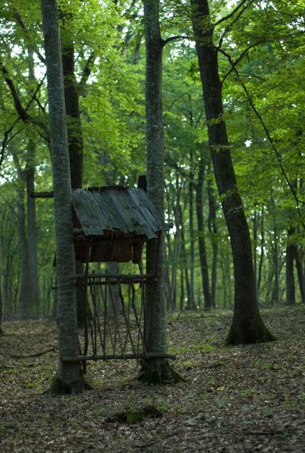 森林里的动物喂食器