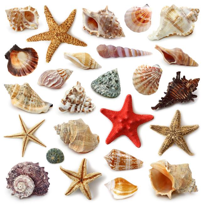 贝壳海螺海星背景素材