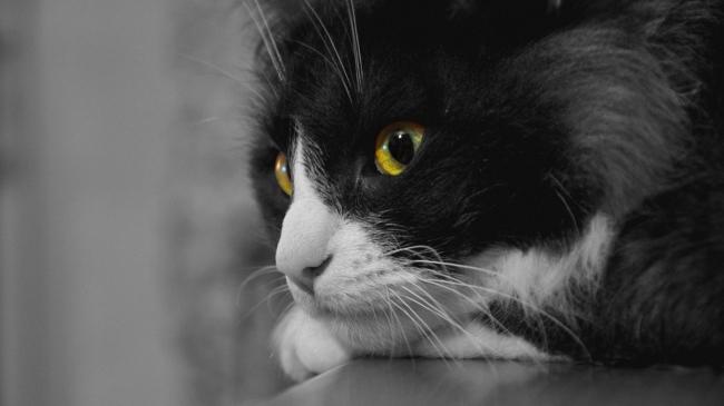 猫类动物名称及图片大全