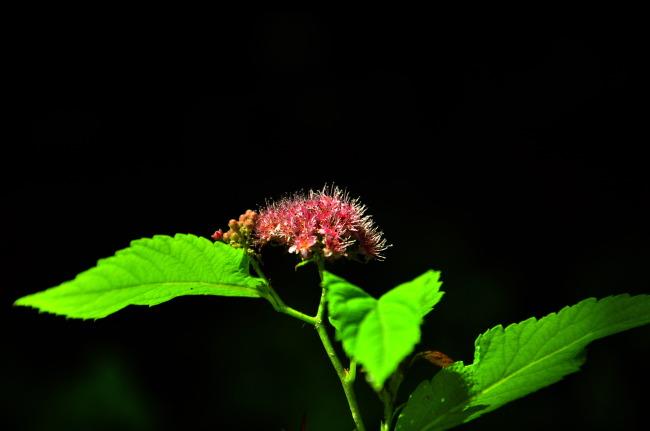 黑色背景的花