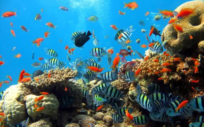 美丽蓝色海底世界风景