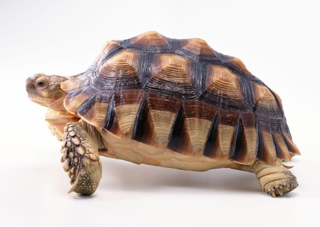 乌龟 海龟 海鱼 水族 鲜鱼 水产 水底 动物 海中的鱼 海底世界 生物