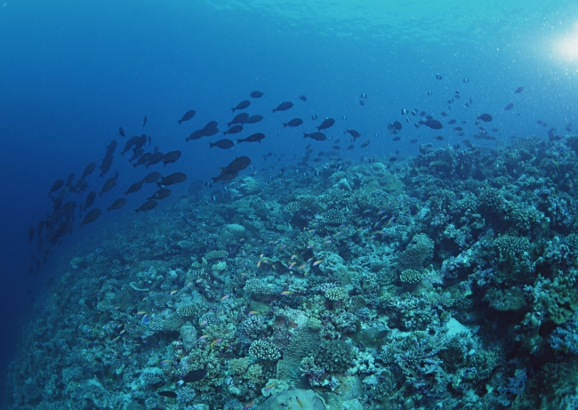 图片名称:海底