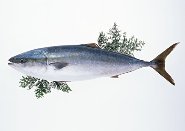 动物 鱼 鱼类 650