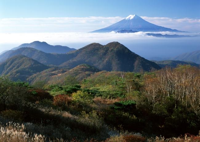 101 兆  风景画 名山 树木 树林 山顶 日本 山峦 世界遗产 自然