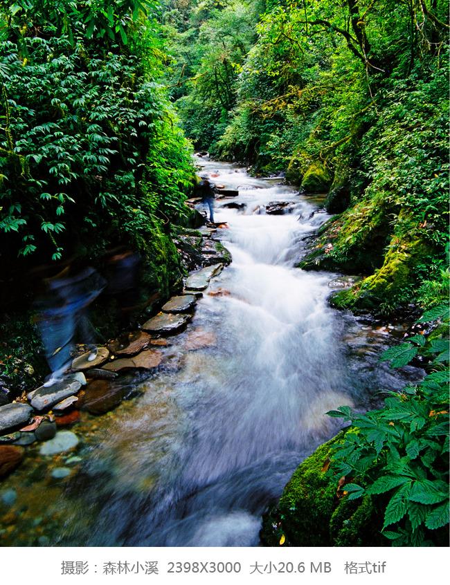 图片名称:森林小溪