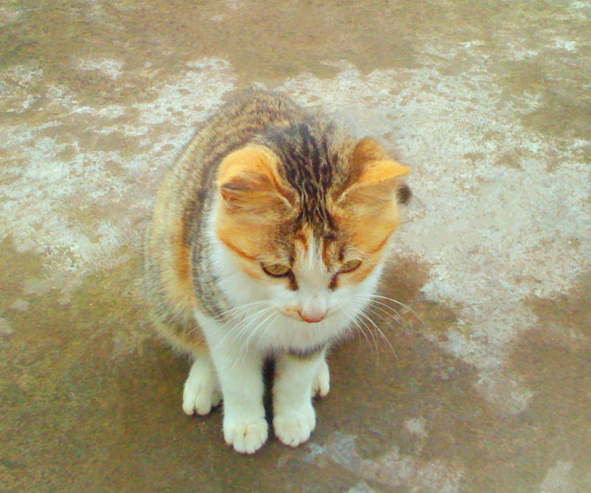 326 兆  猫猫 宠物 动物 可爱 低头俯视
