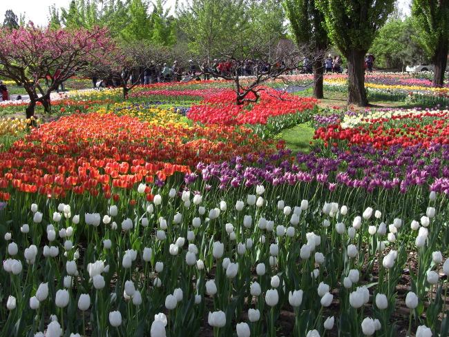 北京植物园风景