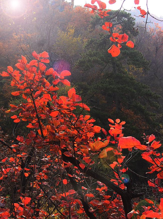 北京香山红叶精品