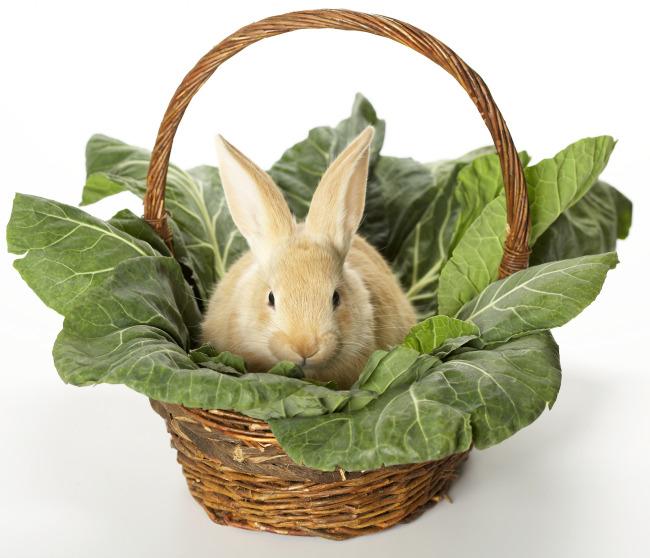 >篮子里兔子  点击下载将进入合作站点下载!