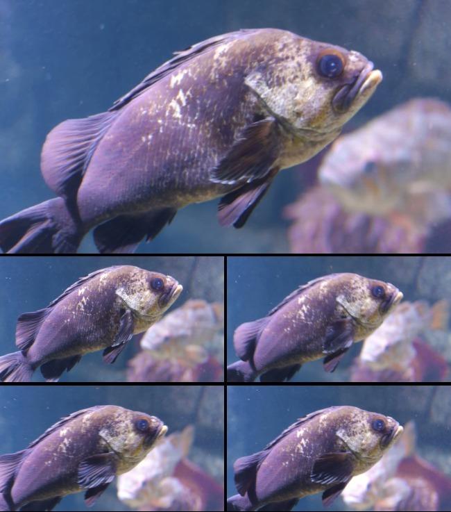 海底动物世界鱼群游动高清视频素材-动态|特效|背景