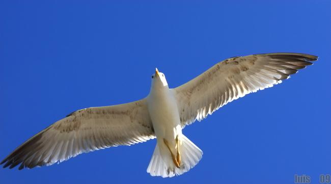 高清翱翔海鸥-图片素材-其他