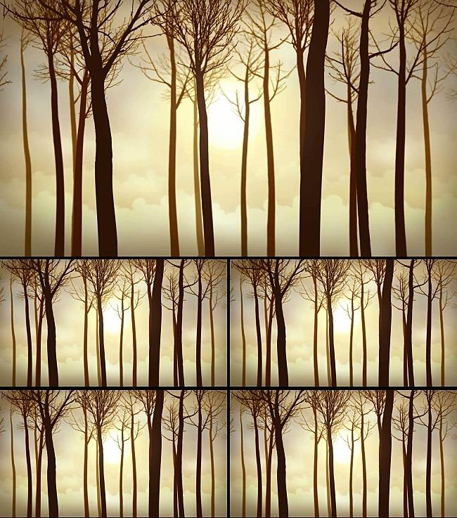 森林树木剪影视频素材