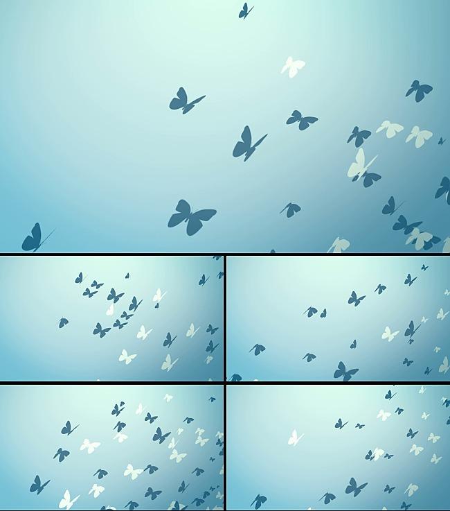 蝴蝶飞舞动态视频素材