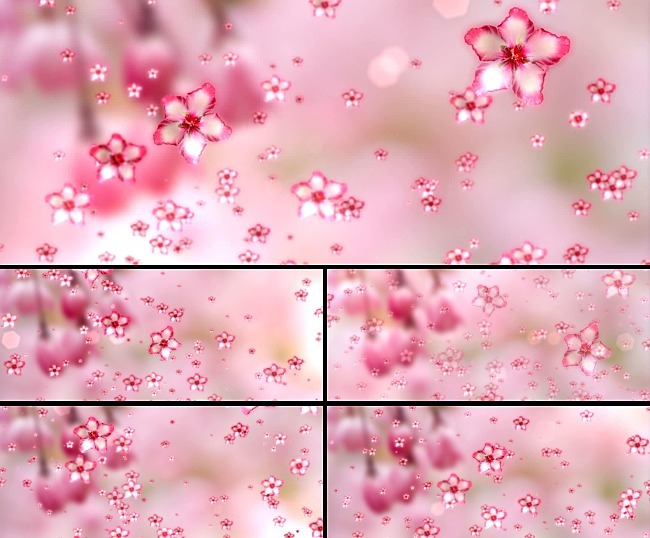 桃花瓣飘落意境动态视频素材