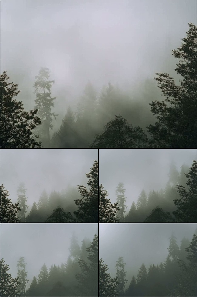 高清云雾森林LED背景视频