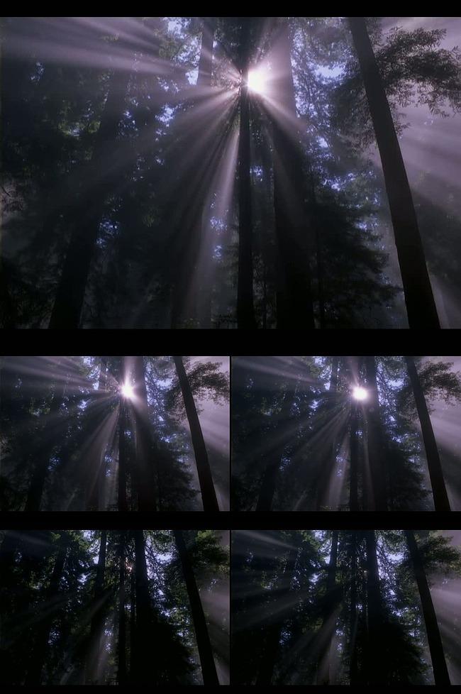 高清透过树荫的阳光背景视频